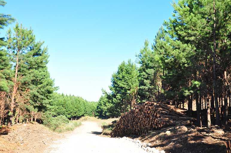 florestal (1)